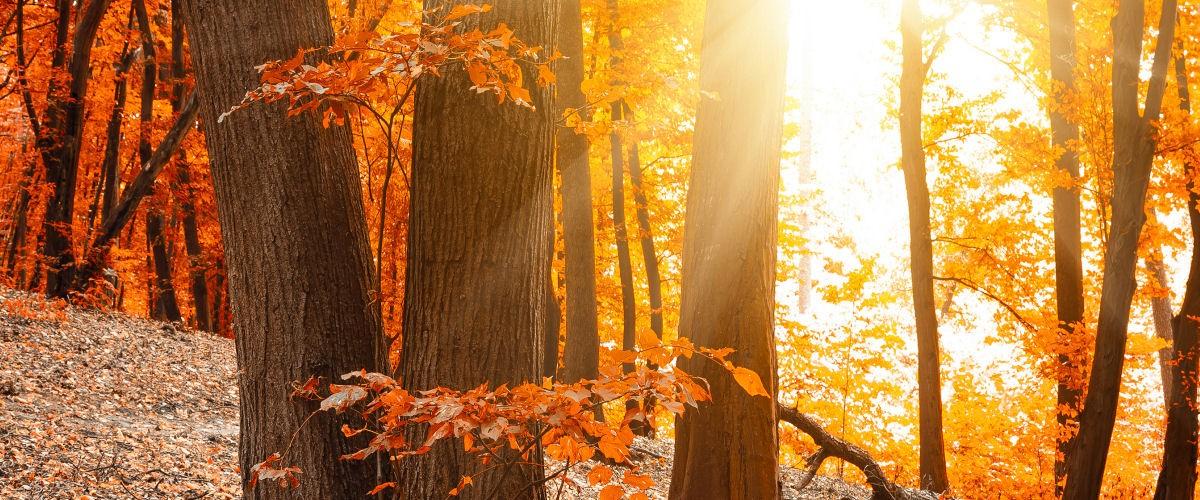 Efterår i skoven 2_slider