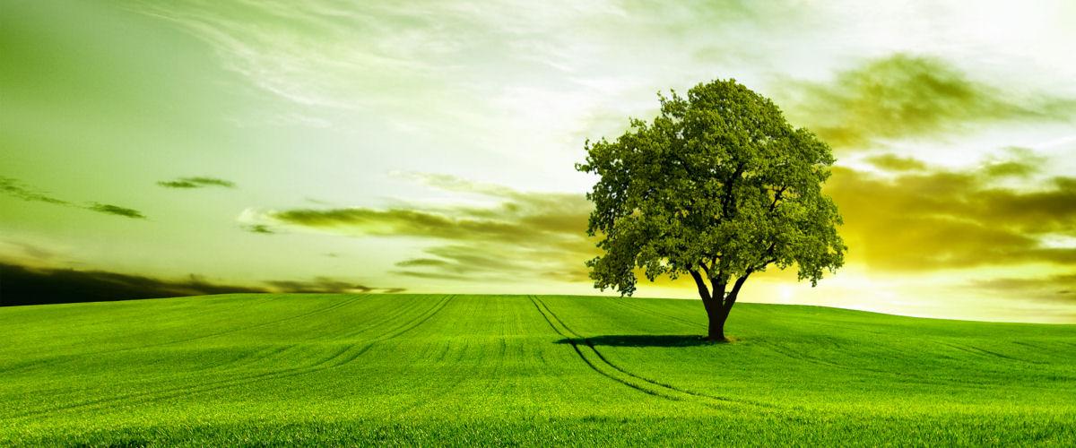Grøn - træ på mark_slider