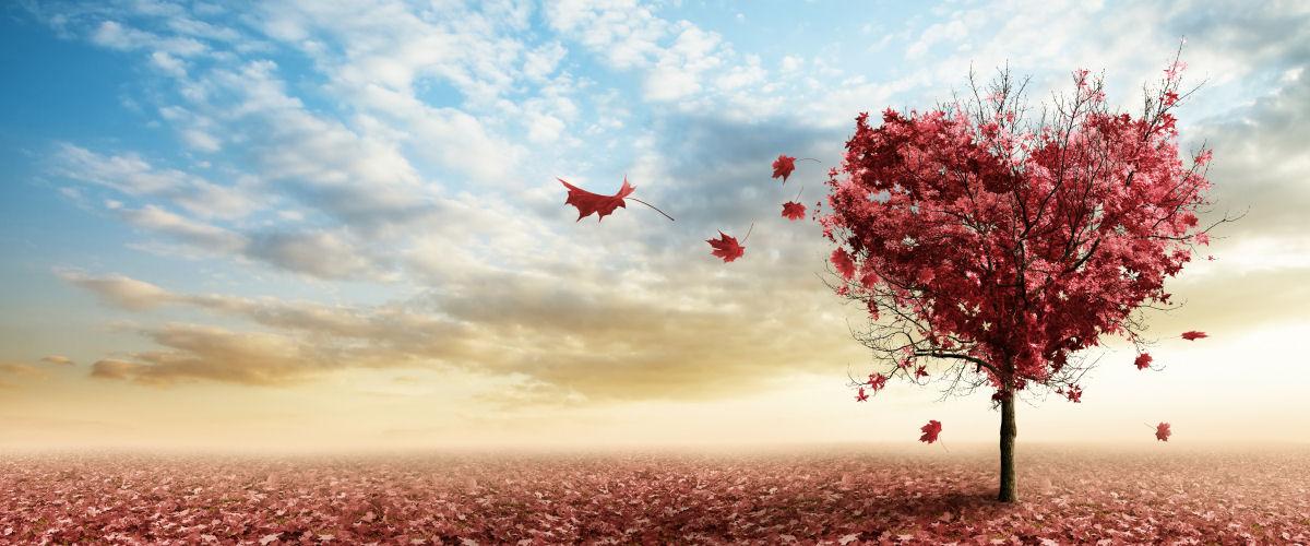 Hjertetræ med efterårsblade_slider