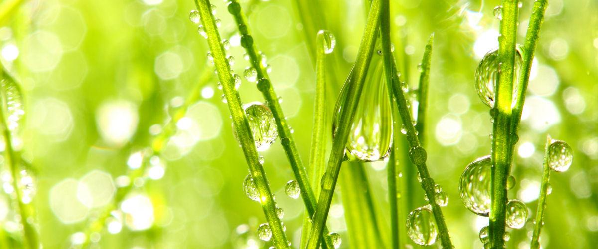 Vanddråber i græs_slider